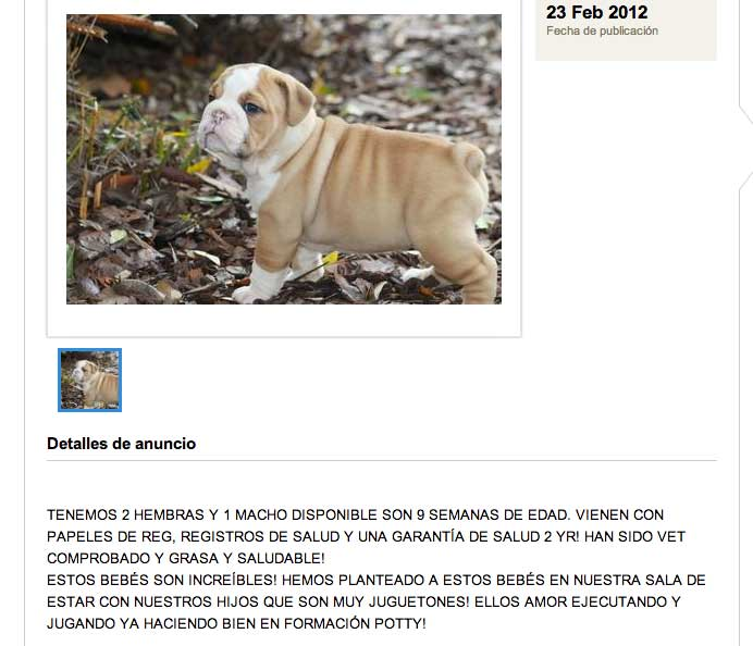 cachorro-bulldog-ingles-adopcion-02